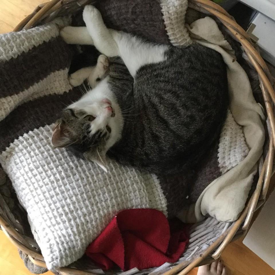 Suchbild: finde die #Katze  eigentlich ist der Korb für Decken und Kissen, jetzt ist es ein Katzenkorb