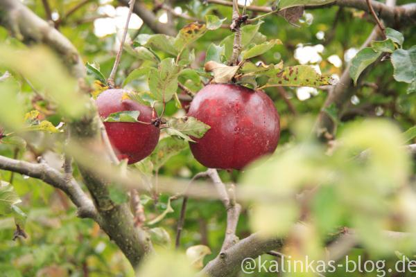 Rinderbraten mit Sherry und Äpfeln