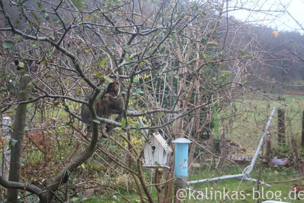 Katzeimbaum